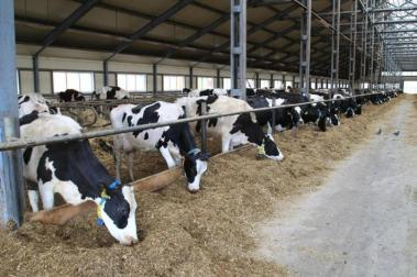 Beef production and processing facility to be built in Kostanay region